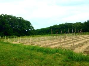 Colby Organic Garden